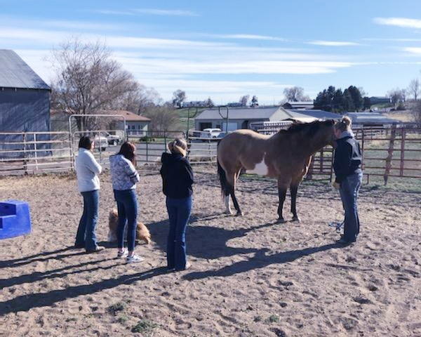 Horse Evaluation practice with Michelle Simmelink.
