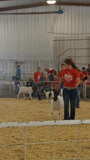 Central FFA member, Gabby Soden, showed her goats during the state fair held in Grand Island. Other members who showed animals included Duke Nelson, Taylor Nelson, and Kale Strizek. Kale also entered three exhibits, white corn stalk, popcorn stalk, and white corn ears which all received Grand Champion.