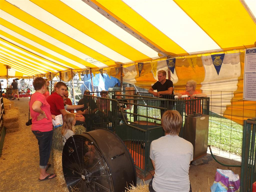 FFA: A Living Experience tent brings in thousands of people in the community during the week of the Eastern Michigan State Fair, July 25-30, 2016. Our chapter presents agriculture through an animal birthing and petting exhibit. 44 FFA students and alumni educated the public about animal production and management. We had a variety of animals born, including 4 calves, 18 piglets, and 35 chicks hatch. FFA members and alumni sell feed cones to visitors as a part of the hands-on experience. The public had the opportunity to view a live birth of piglets.