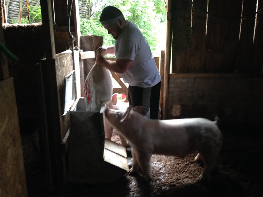 Daniel Peterson, Chapter President and his family purchased some light hogs from fair. The Peterson family offered to finance the raising of the hogs and then donated all of the animals to a Sausage Sale. The goal was to sell 350 lbs. of sausage at $3.50 each. The chapter members sold 500 lbs. for a profit of over $1700. By buying hogs for a fair price and buying feed, bedding, and processing services locally, members could see how buying local can have an impact on the community. Creating a incentive program also benefited members who may be struggling to afford FFA events and apparel.