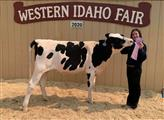 Dairy Cattle Showmanship and Quality