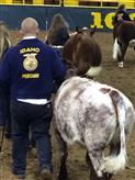 Snake River Stampede Calf Scramble show