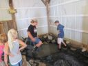Fayette County Free Fair - Young McDonald's Farm