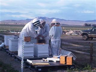 Beehives, Smith Valley FFA, Nevada