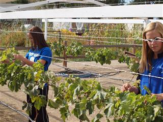 Working at the orchard, Smith Valley FFA Chapter, Nevada