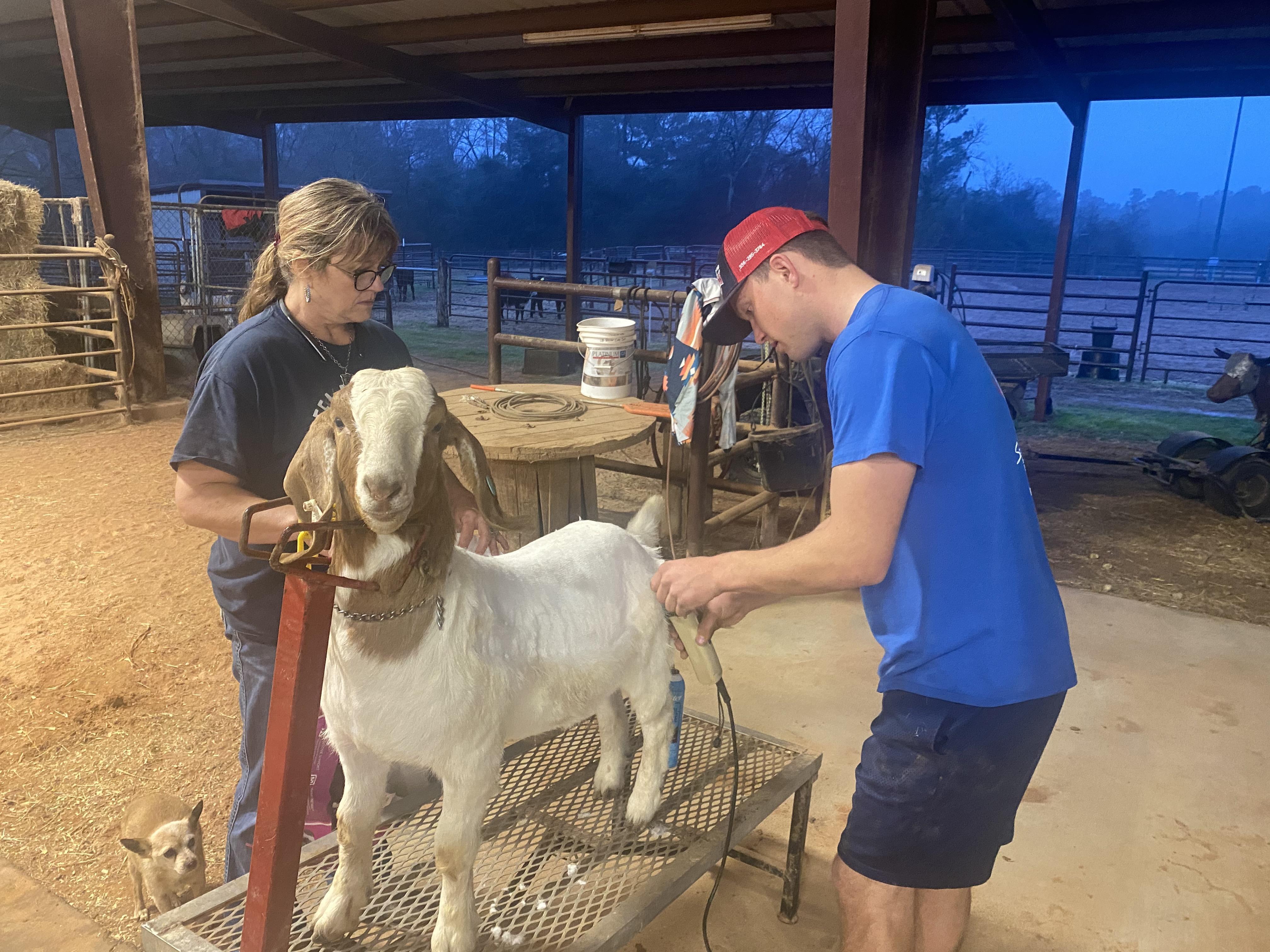 Boyd Hanagriff, Alpha Omega FFA in his Market Goat SAE