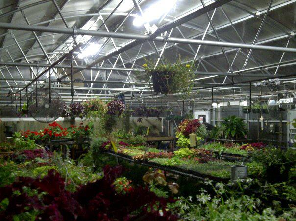 Spring Plant Sale Prep, Batesville FFA, Arkansas