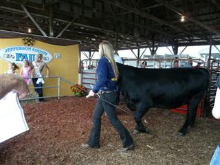 Sale at the Fair, Washington County School FFA, West Virginia