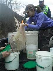 Stocking Trout, Mineral County FFA, Montana